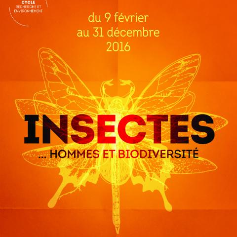 Exposition « Insectes… Hommes et biodiversité »
