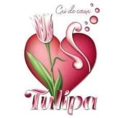 Tulipa - Cri de Cœur